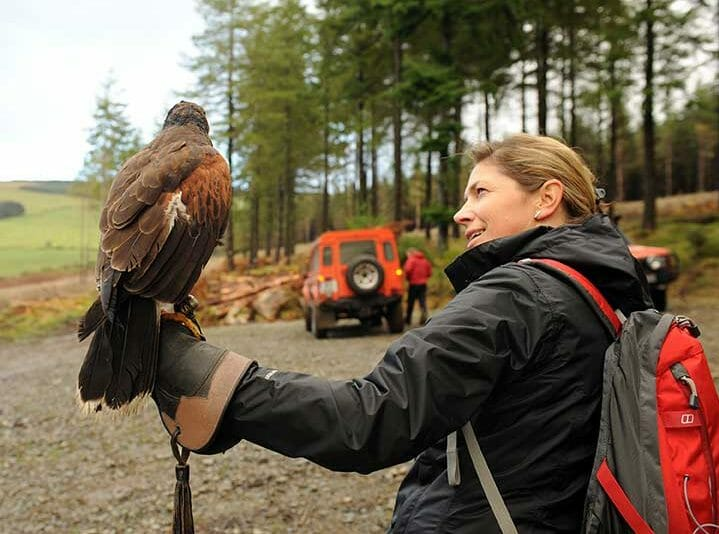 A lady wearing a glove holding a bird on her arm during the outdoor team activity falconry display with Orangeworks.