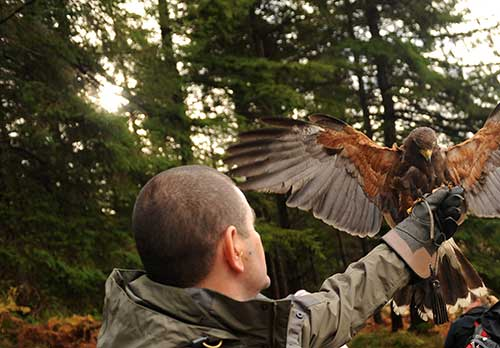 A man wearing a glove holding a bird on her arm during the outdoor team activity falconry display with Orangeworks.