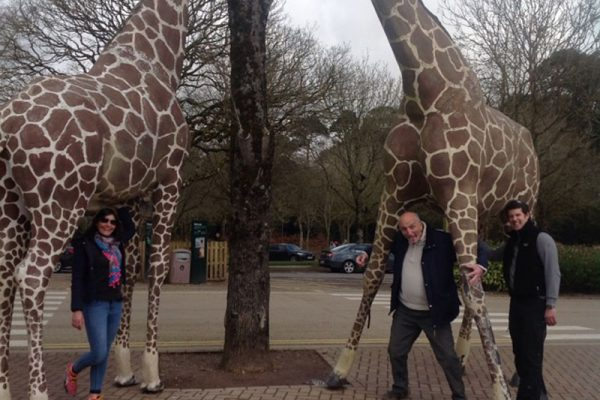 Delegates taking photos with giraffe statues during Go Team Fota Park treasure hunt