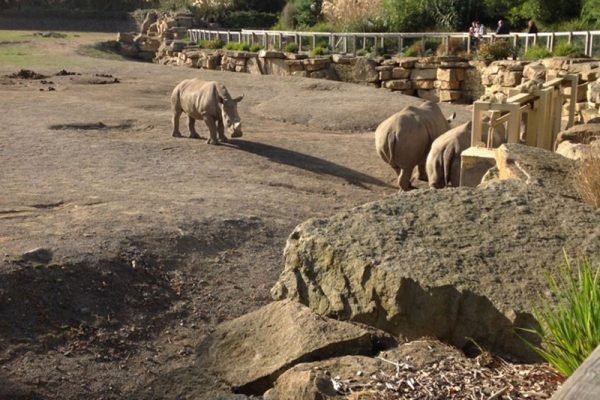 Rhinos in Dublin Zoo Treasure Hunt