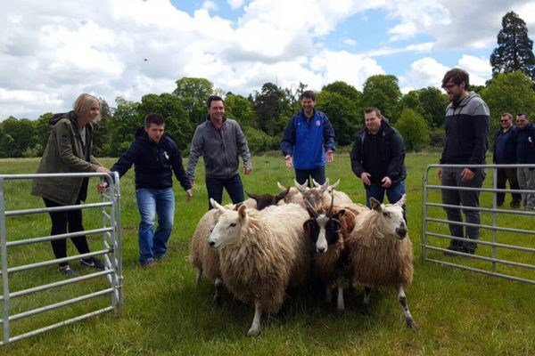 Delegates working together to get the sheep inside their pen