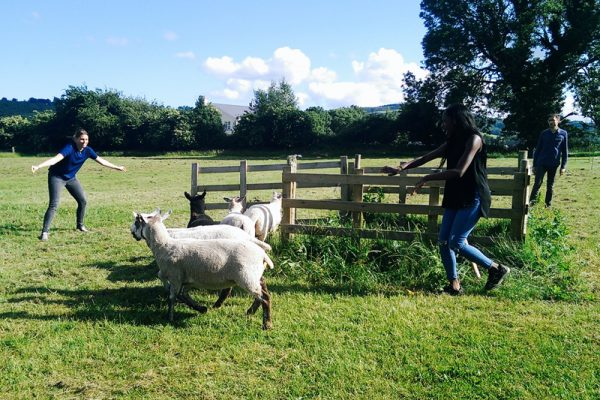 Delegates working together to try get the sheep into the fenced area