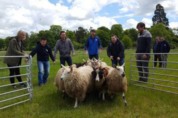 Delegates taking part in some sheep herding