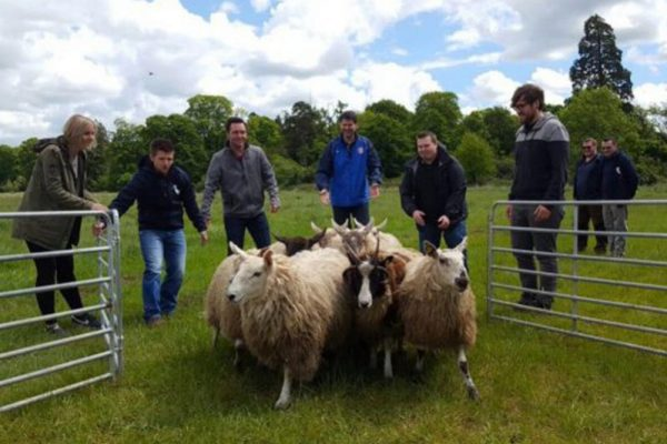Delegates of an Orangeworks team building activity taking part in some sheep herding