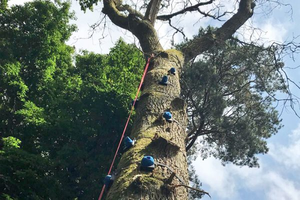 Tree Climb high ropes activity at Carton House