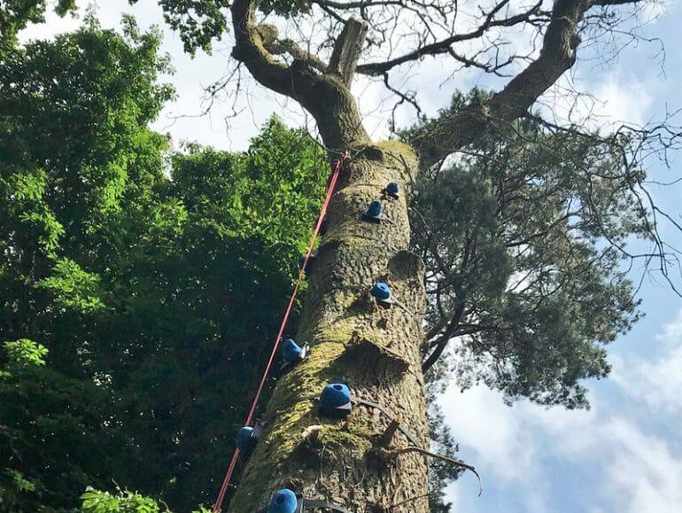 Tree Climb high ropes activity at Carton House